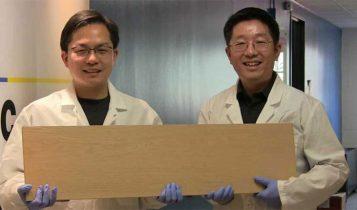 دانشمندان نوعی چوب تولید کردهاند که به اندازه فولاد محکم است